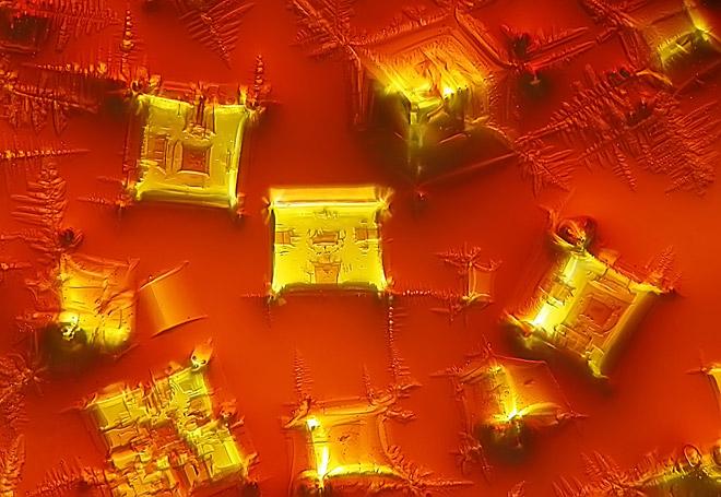 De la cuina al microscopi